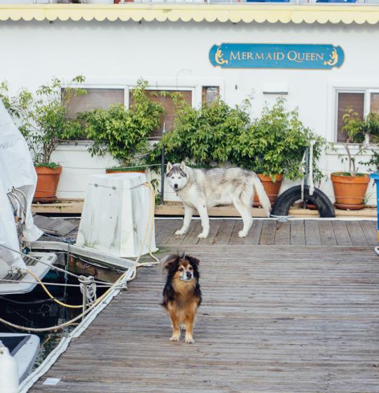 Sausalito Bay Area airbnb pet friendly staycation dog friendly sausalito