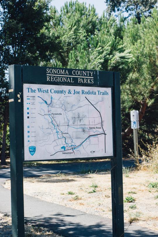 dog friendly hiking in Sebastopol, Sonoma county regional parks, west county and Joe rodota trails