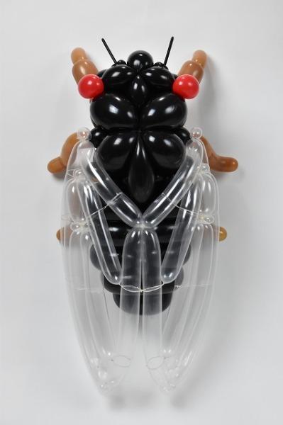 蝉 cicada 2017.5.28