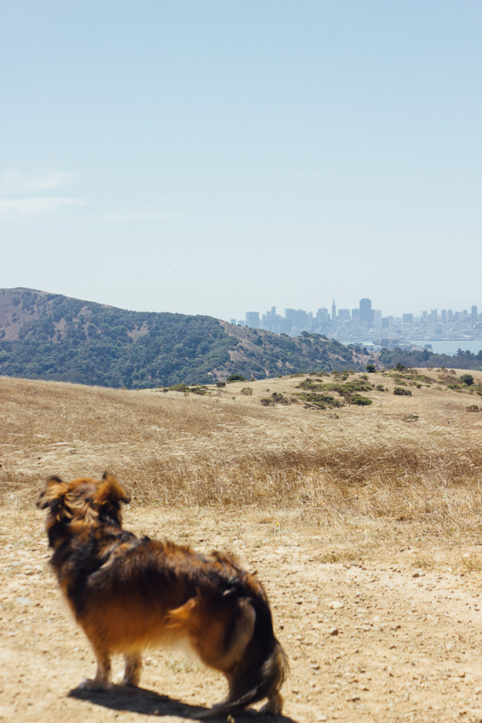 Fantastic view from Tiburon St. Hilary Open space Preserve with dog friendly hiking in Marin