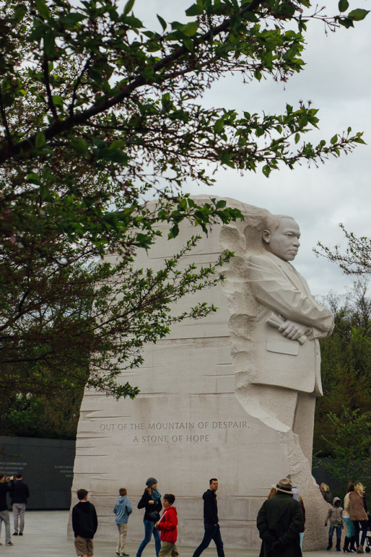 cherry blossoms Washington DC MLK
