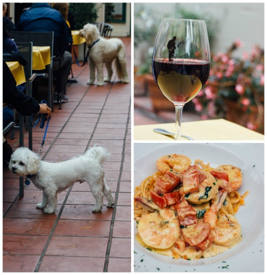 dog friendly restaurants Carmel, dog friendly dining carmel, dog friendly carmel, dog friendly guide to carmel