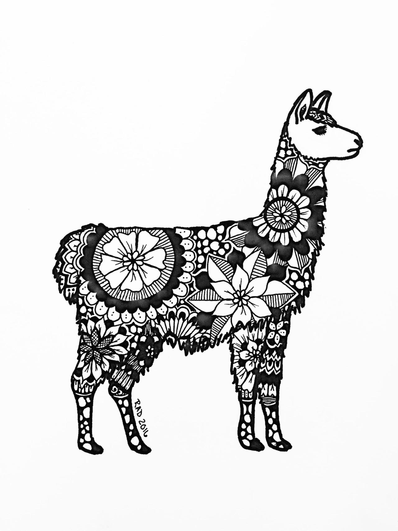 peru animals llama