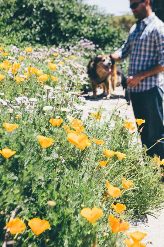 dog friendly San Francisco, dog friendly guide, dog friendly spots in San Francisco, where to take your dog in San Francisco, dog friendly parks in San Francisco, Buena Vista Park