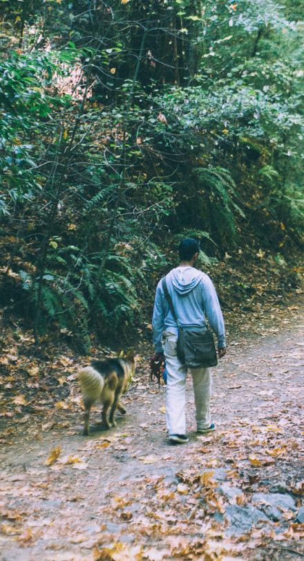 dawn falls trail larkspur