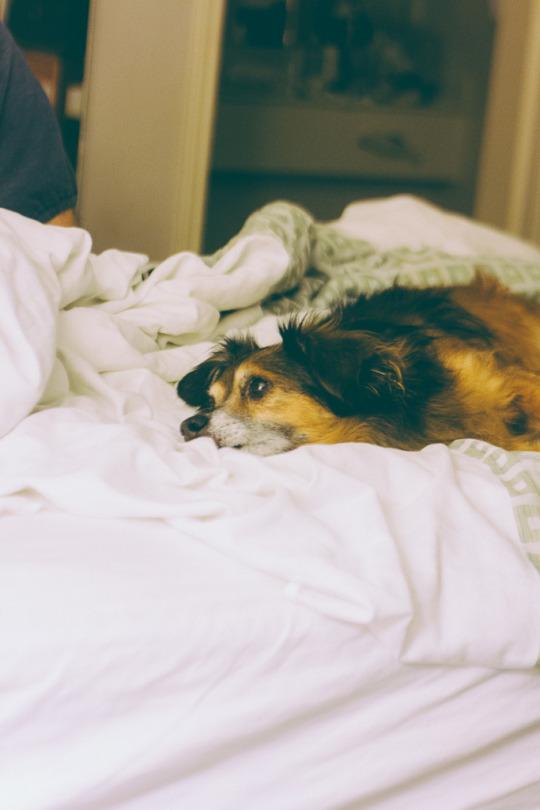 dog friendly hotels in Sacramento, where to stay with your dog in Sacramento, pet friendly hotels Sacramento