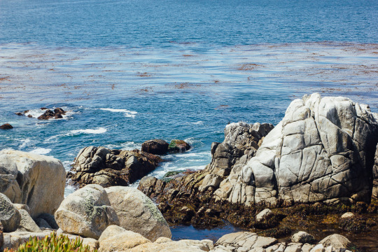 17 mile drive, pebble beach, carmel to monterey, dog friendly road trips, road trips with dogs, dog friendly road trips in California, best road trips with dogs, road trips with dogs in west coast
