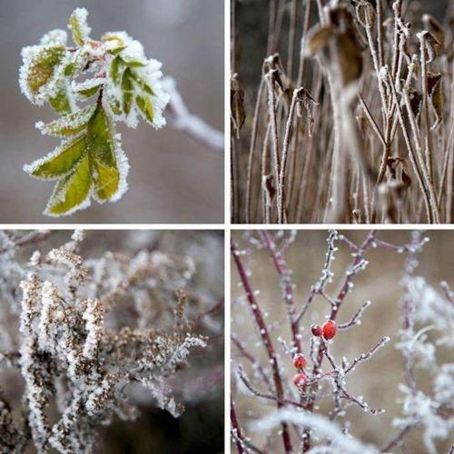 amandaricks.com/magical-winter-collage/