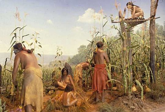 Image result for INDIANS HARVESTING CORN