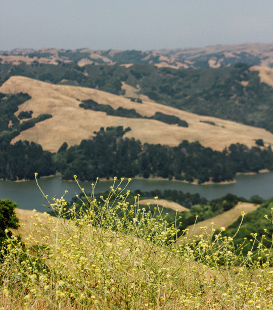 bay area hikes with dogs, dog friendly hikes bay area, hiking trails that allow dogs, dog friendly hiking trails bay area, dog friendly hikes san francisco