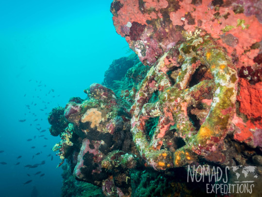 underwater photography ocean sea Indonesia marine indo pacific tropical coral reef diving scuba snorkel animal wild color Bali shipwreck liberty uss captain boat ship wheel sunk tulamben amed wreck