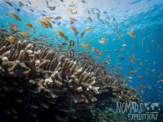 tropical coral reef photography underwater animal filming scuba diving indonesia Komodo national park indo pacific blue animal wildlife fish
