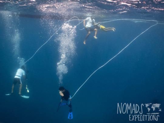 Hookah Diving For Dinner