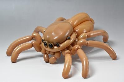 ハエトリグモ jumping spider 2017.5.7