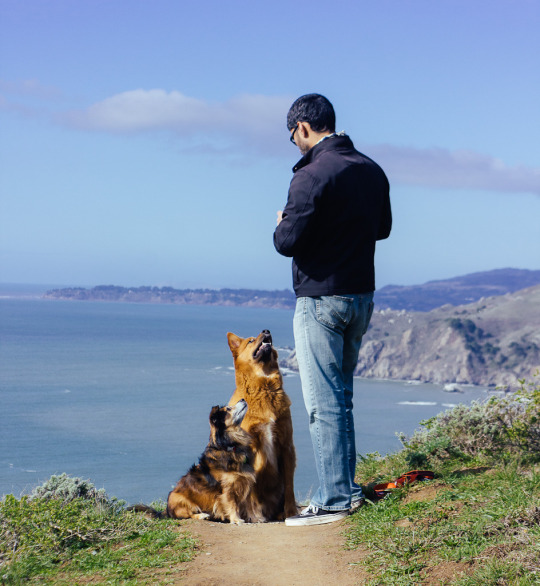 Is Muir Beach Dog Friendly