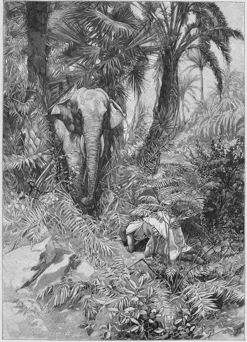 """Résultat de recherche d'images pour """"mémoires d'un éléphant blanc"""""""