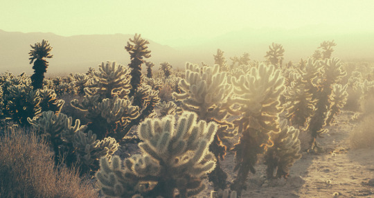 Day trip to Joshua tree, Joshua tree hikes, Joshua tree national park, sunrise at Joshua tree, day trip from palm springs, joshua tree restaurants, first timers guide to joshua tree, joshua tree hiking trails, where to stay in Joshua tree