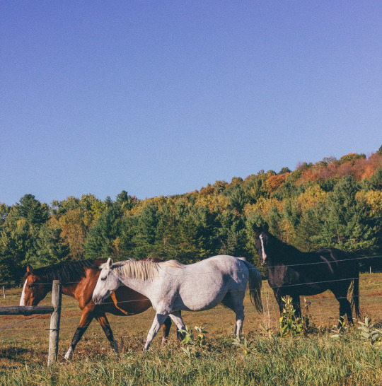 Vermont Fall foliage new England fall colors travel