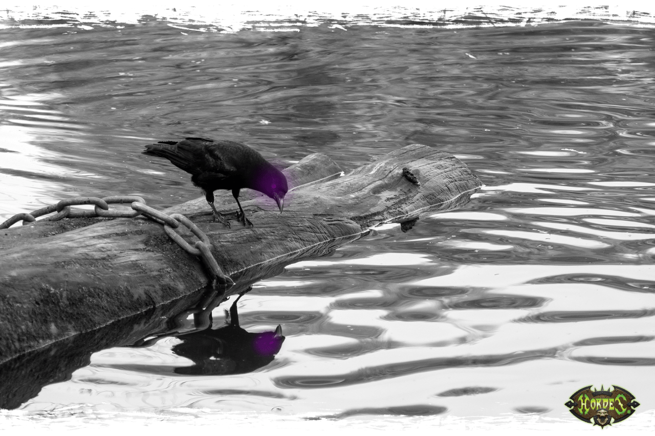 A crow peers into a lake. What portents does it see in the murky depths?