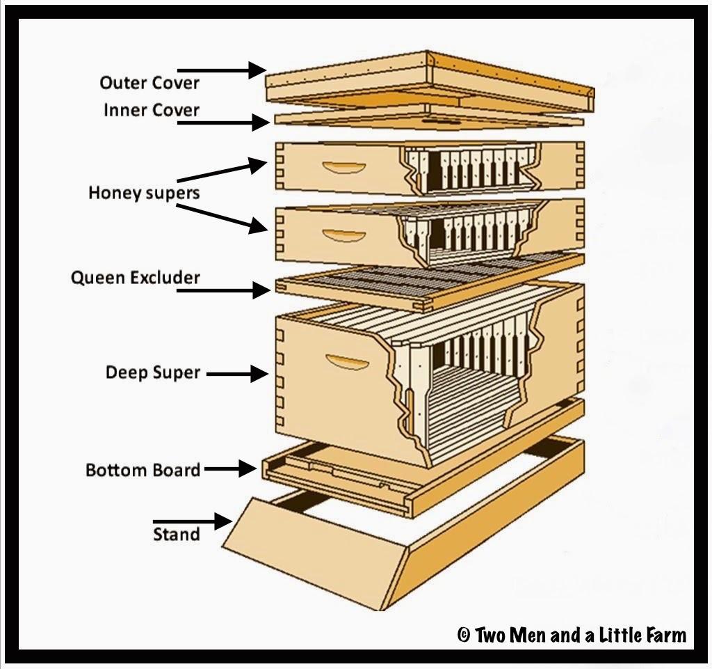 Bee Ology