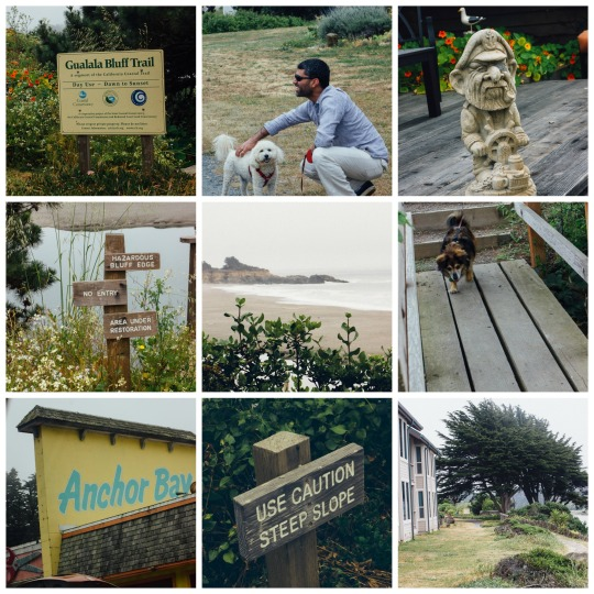 dog friendly road trips, road trips with dogs, dog friendly road trips in California, best road trips with dogs, road trips with dogs in west coast, coastal redwoods trail