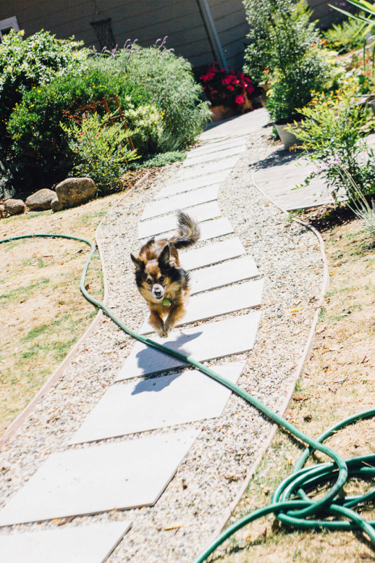 dog friendly hotels in Sebastopol