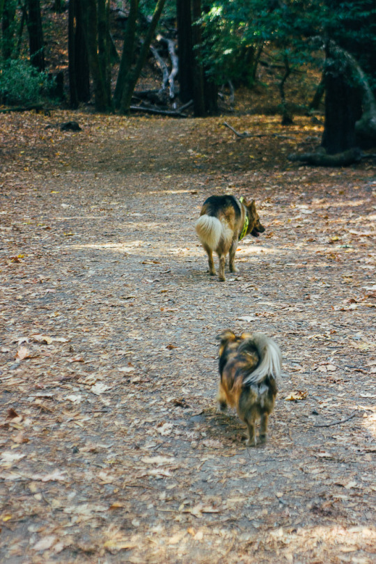 Best Dog Friendly Hikes In Marin