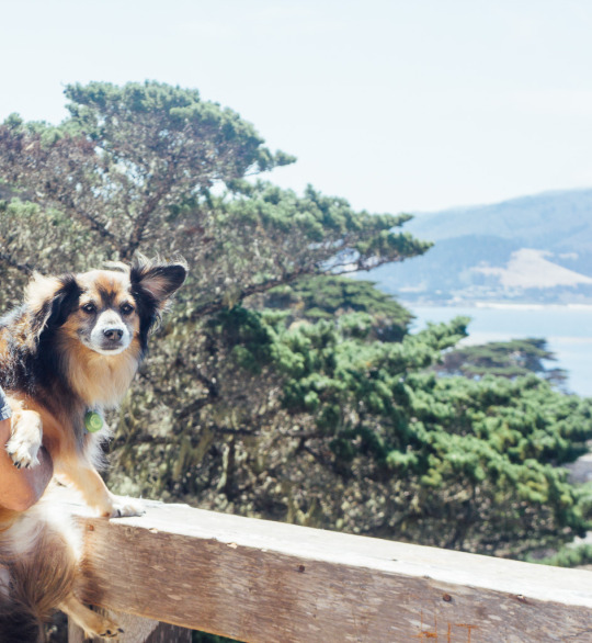 17-mile drive pets dogs Carmel California