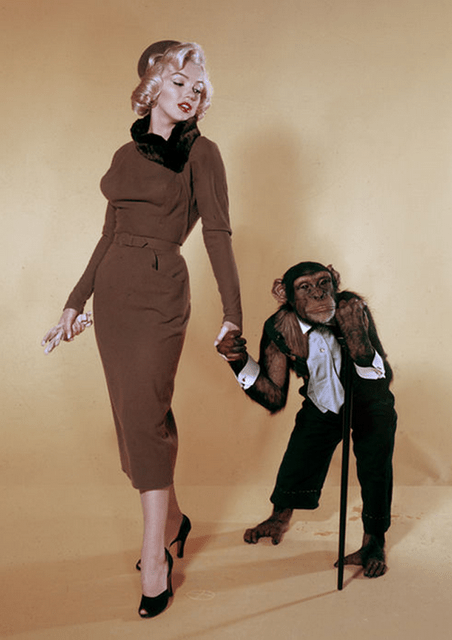 Marilyn Monroe in one of the oddest publicity stills for Monkey Business