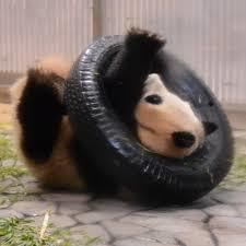 タイヤ パンダ