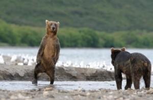 熊二足歩行