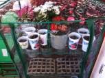 My little greenhouse
