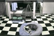 Surprise surprise...sleeping