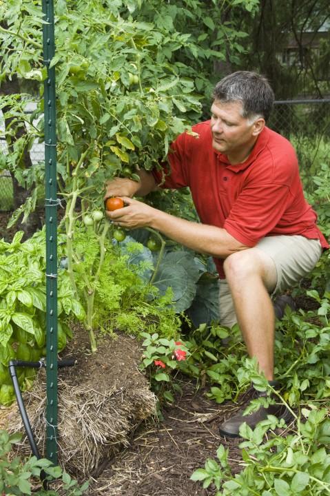 SG517 Straw Bale Gardening Part 3 Amp Wrap Up