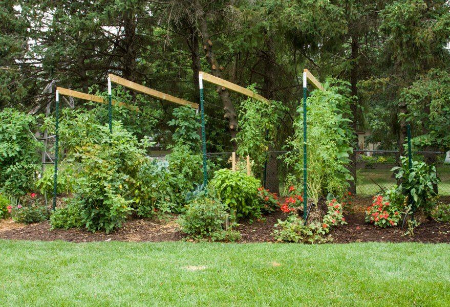 joel s own straw bale garden 6ftmama com