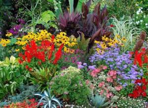 40 pezzi sempre verde vinca Gertrude Jekyll piantare fiori bianchi