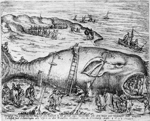 old whale illustration