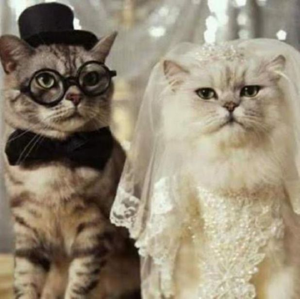 11 Cutest Animal Wedding Pictures To Make Your Day