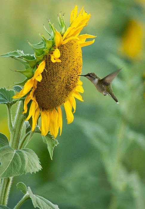 Admire The Natural Beauty Of Hummingbirds