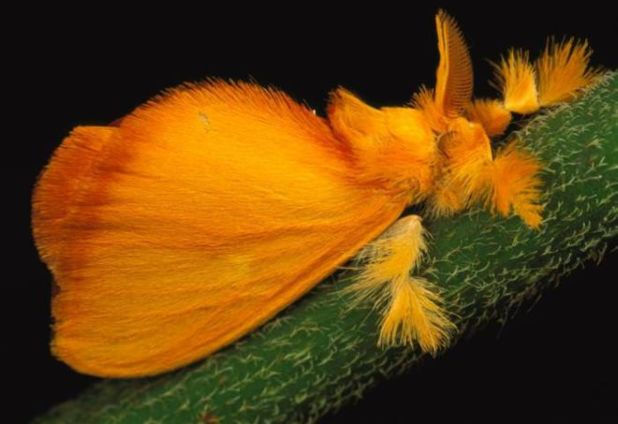 17 Most Beautiful Photos Of Moths