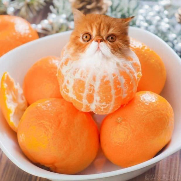 Cute Cats Photoshopped Into The Food