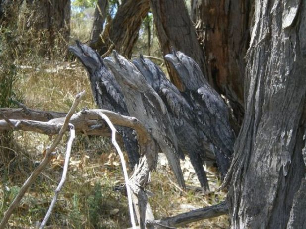 20 Mind Blowing Examples Of Animal Camouflage
