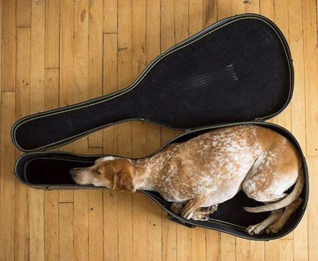 These 23 Cute Animals Can Sleep Anytime And Anywhere