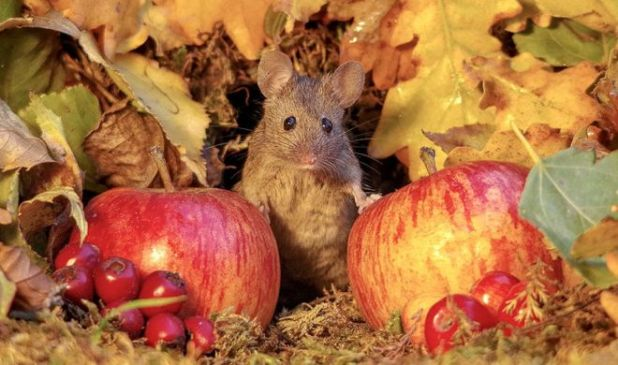 Photographing A Mice Living In A Garden
