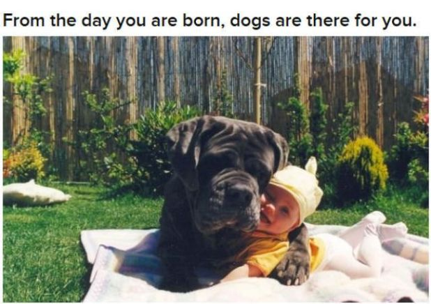 Dogs Are Humans' Best Friends