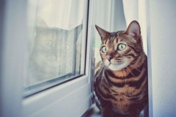13 Amazing Facts About Cats That'll Make You Want To Get One
