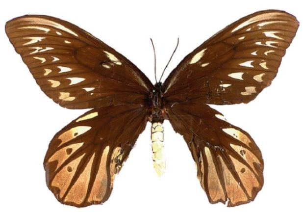 25 Largest Insects Ever Found In World