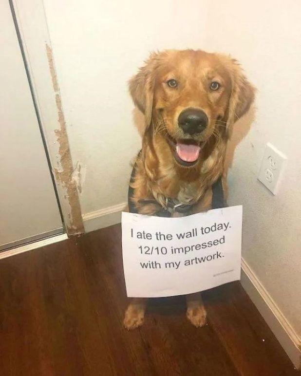 15 Hilarious Shaming Photos Of Naughty Pets
