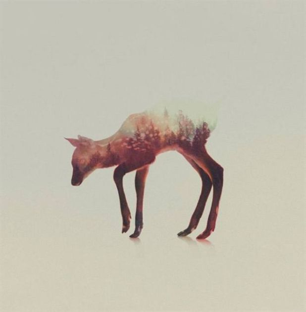 Artistic Animal Photos Merged With Forests
