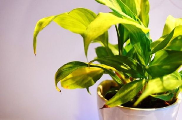6 Ways Your Plants Try To Communicate With You